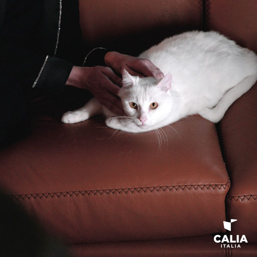 divano calia italia elisir